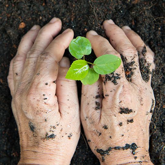 new life or environmental conversation concept PDPEJZU